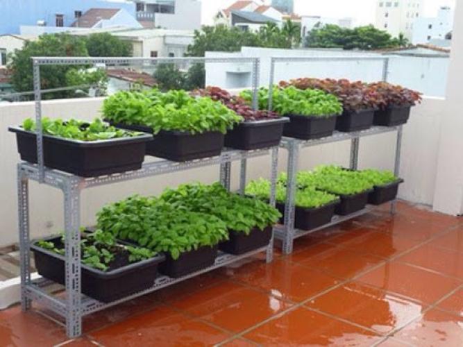 Kệ sắt trồng rau